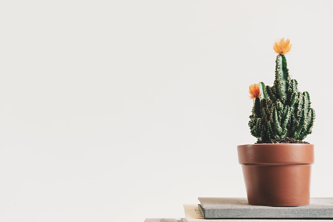 Piante Ufficio Stress : Tradecorp italiaeffetto priming preparare le piante per